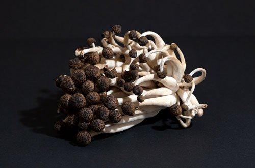 Bübchen-Pilze aus Egers Obst- und Gemüselädle